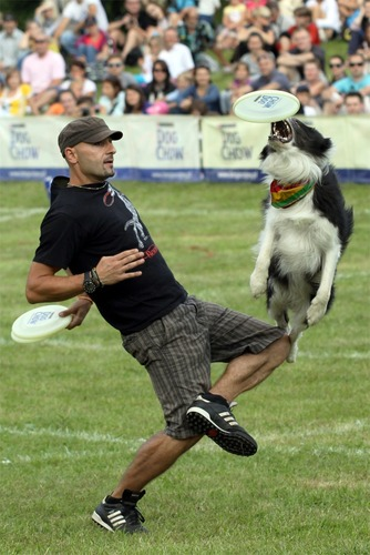 Dog Chow Disc Cup Final - Mokotów Fields - Warsaw